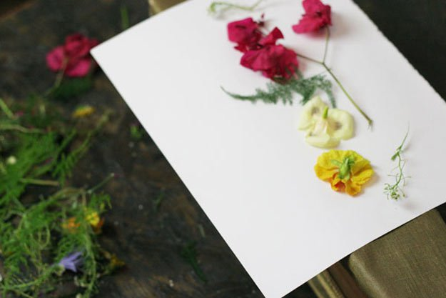 Place flowers on paper