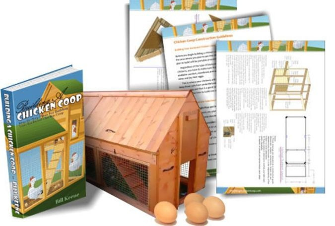 How To Build A Chicken Coop| How to Build A Chicken Coop in 4 Easy Steps