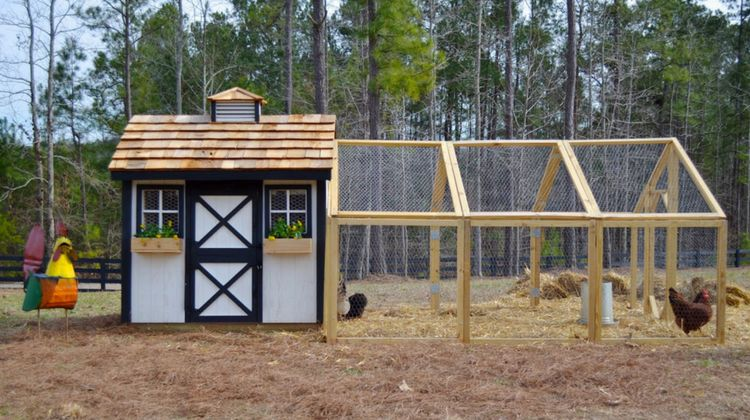 How To Build A Backyard Chicken Coop | Homesteading