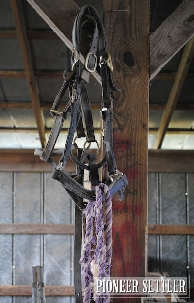 Halter and Lead Rope | 9 Things I Always Have at the Barn