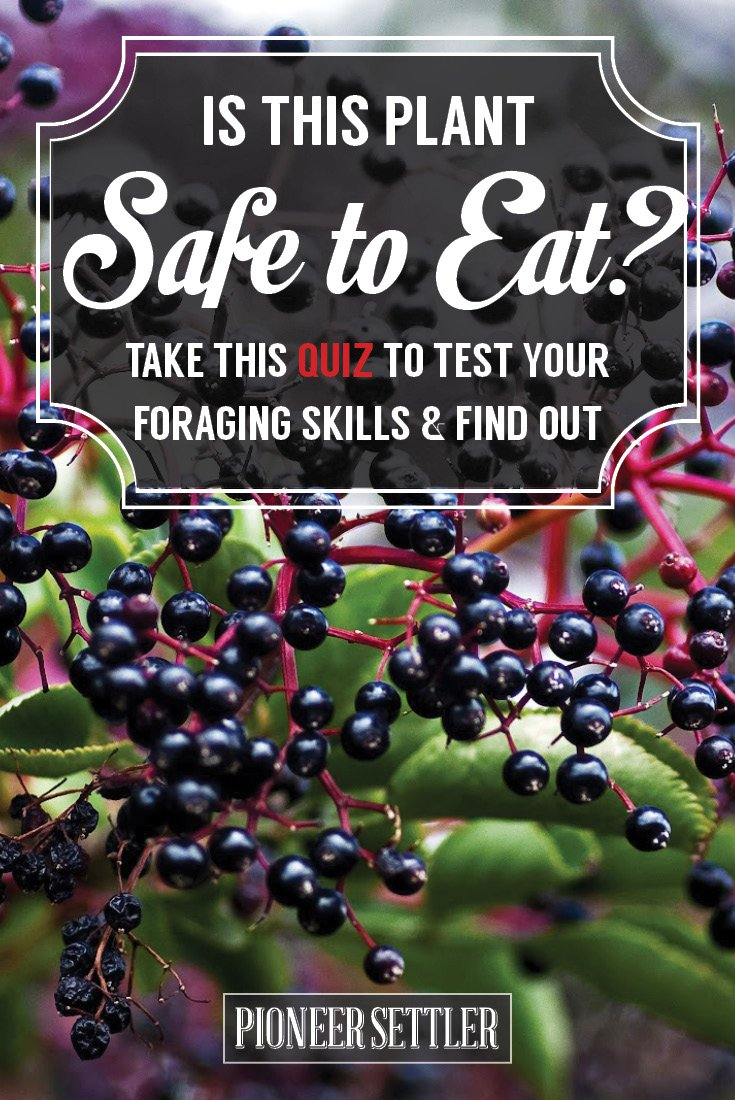 Foraging for Edible Wild Plants - Could You Survive? [QUIZ]