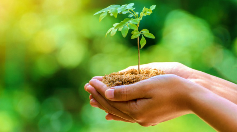 Growing Trees For Profit In Your Backyard Homesteading