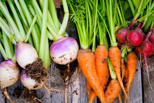 Mound Gardening - Growing Root Vegetables | Gardening Tips And Tricks To Become A Successful Homesteader