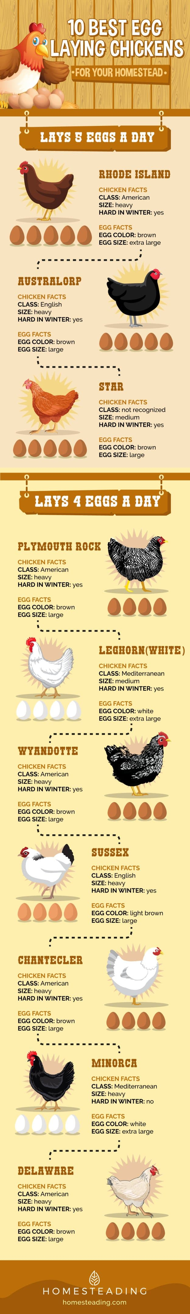 10 Best Egg Laying Chickens Infographic