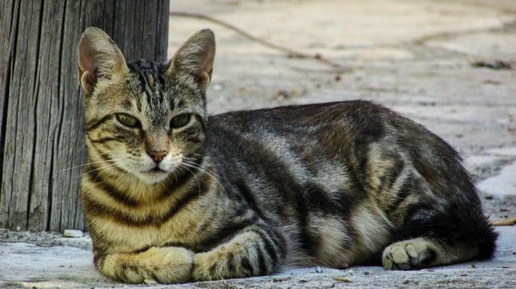 Barn Cats Their Use Explained And Myths Debunked