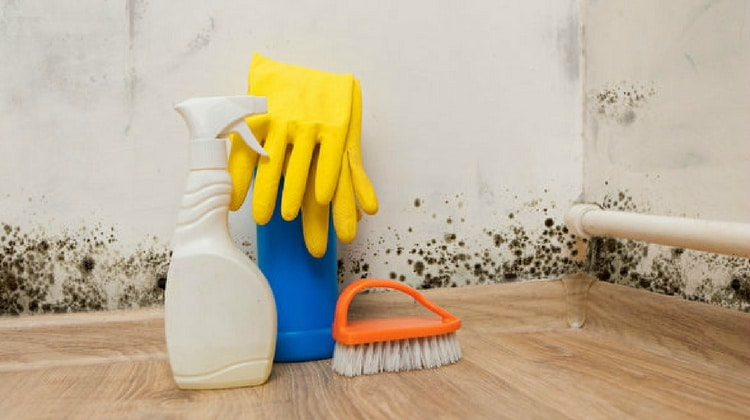 Black Mold 8 Ways To Kill It Using Natural Home Remedies