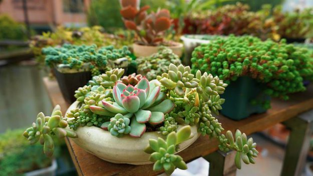 Succulent Plants | Stunning Drought-Tolerant Plants For Low-Maintenance Landscapes