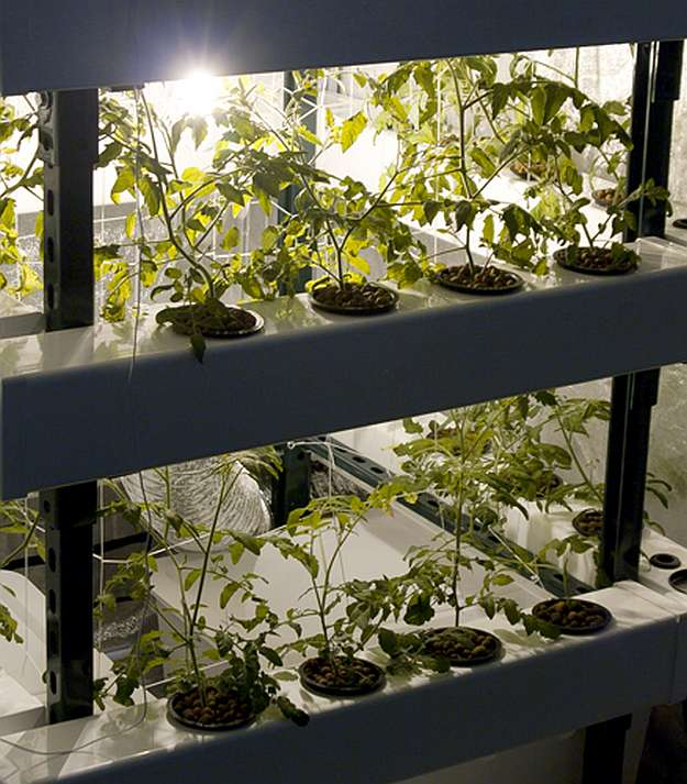 Amazing Hydroponic Systems For Indoor Gardening