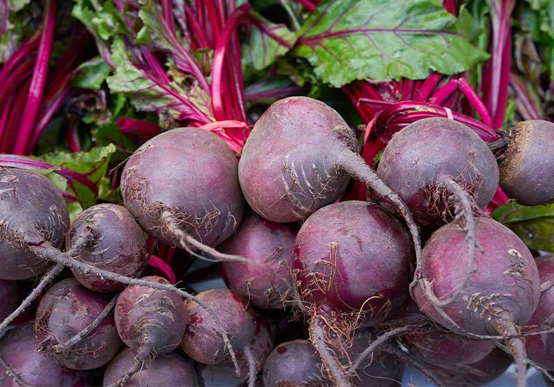 Beets in a row stacked in outdoor market | fall vegetables