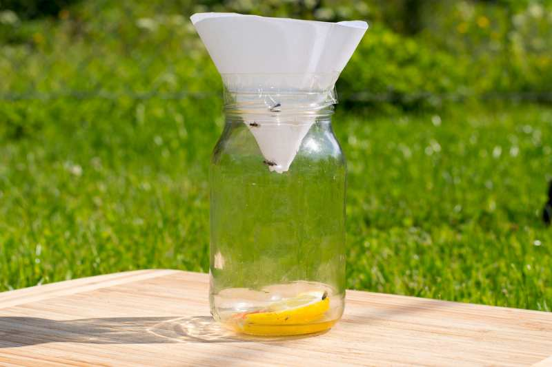 fruit-small-flies-trap-made-out