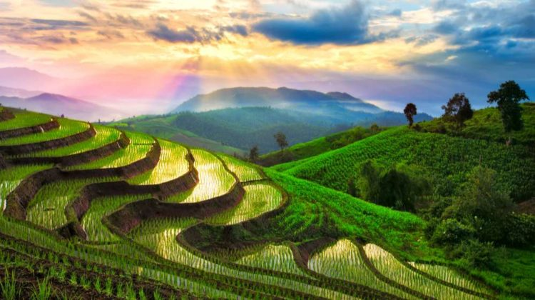 terraced rice paddy field chiangmai thailand | Terrace Farming Around The World | Types Of Farming | featured